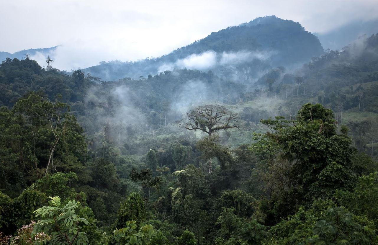 En Colombia, más de la mitad de sus ecosistemas se encuentran en riesgo