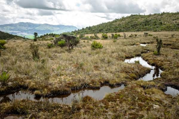 Diálogos y pactos por la conservación del páramo: herramientas para los nuevos mandatarios