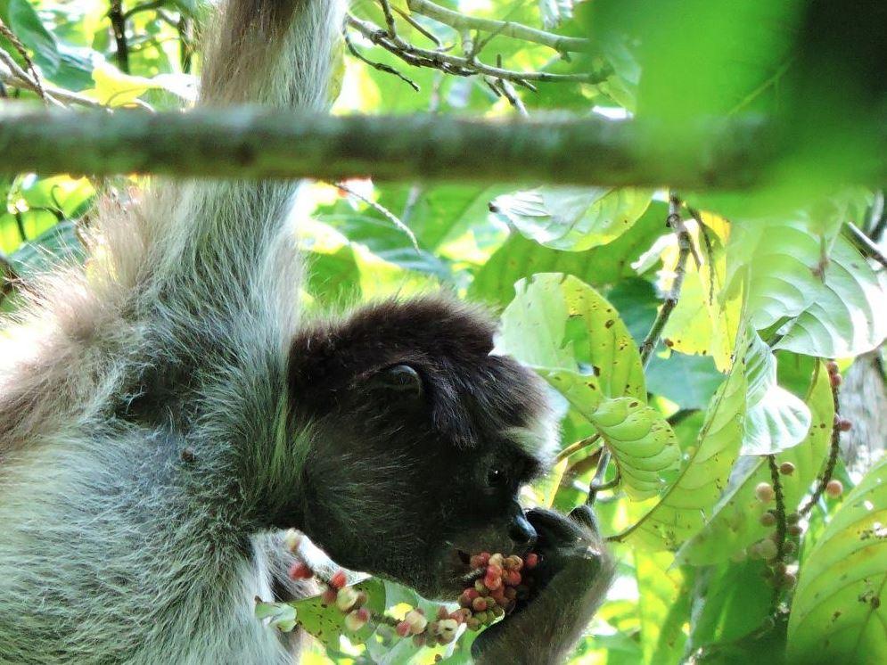 ¿En dónde se encuentran los primates en Colombia?