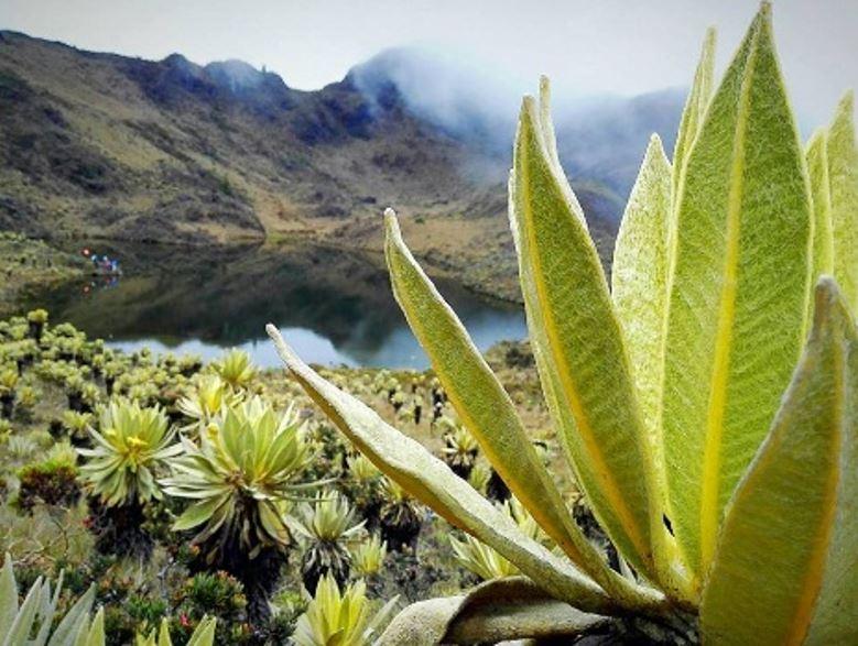 Firman gran pacto para conservar corredor de páramos de la Cordillera Central