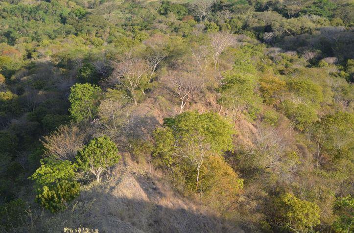 Plataformas de monitoreo de la biodiversidad, primer paso para salvar el bosque de los mil colores