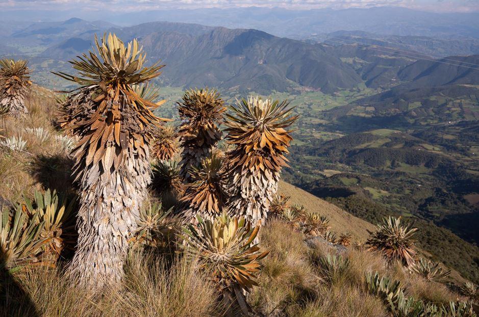 190 plantas endémicas de alta montaña se encuentran en alguna categoría de amenaza