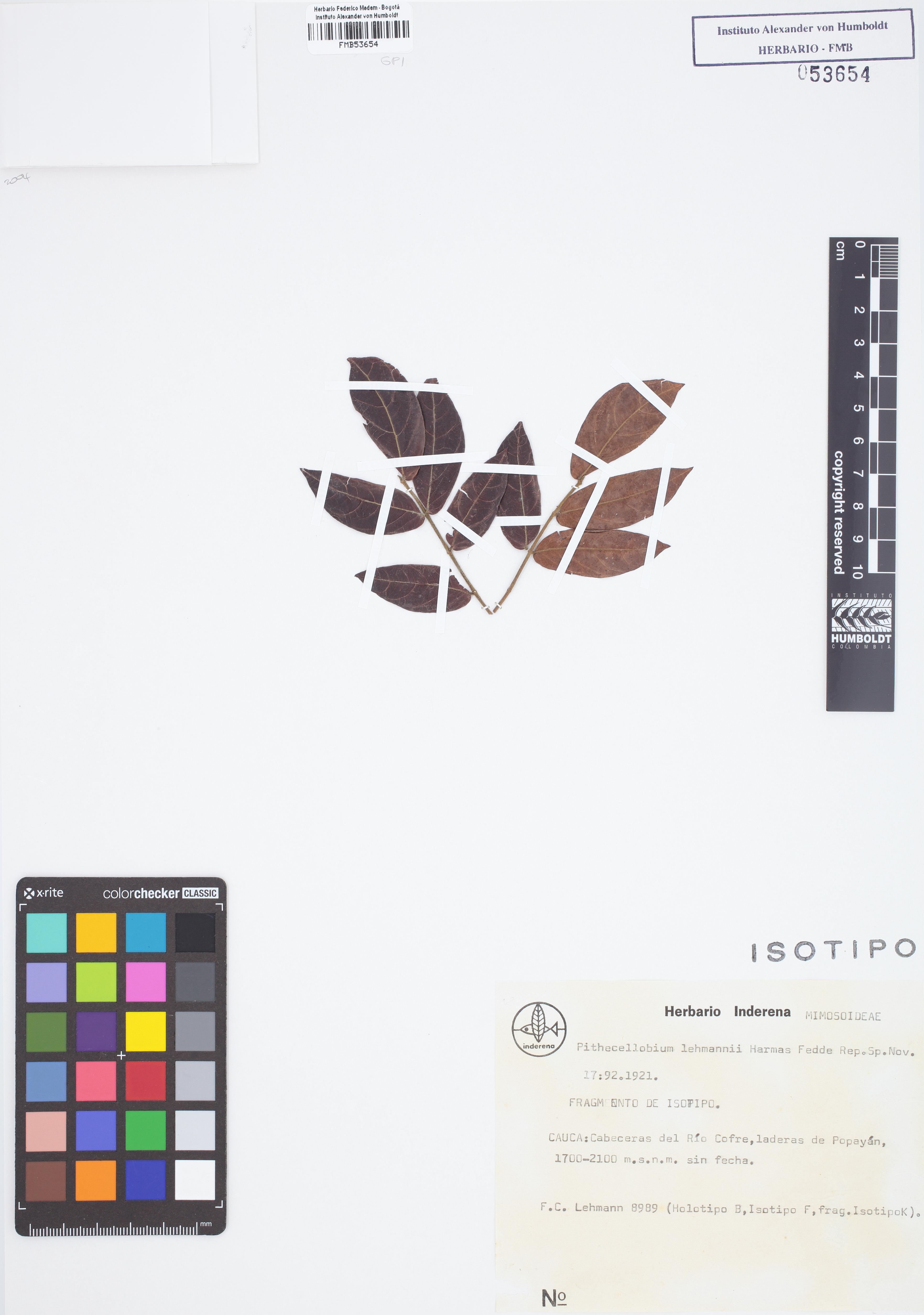 Isotipo de <em>Pithecellobium lehmannii</em>, FMB-53654, Fotografía por Robles A.