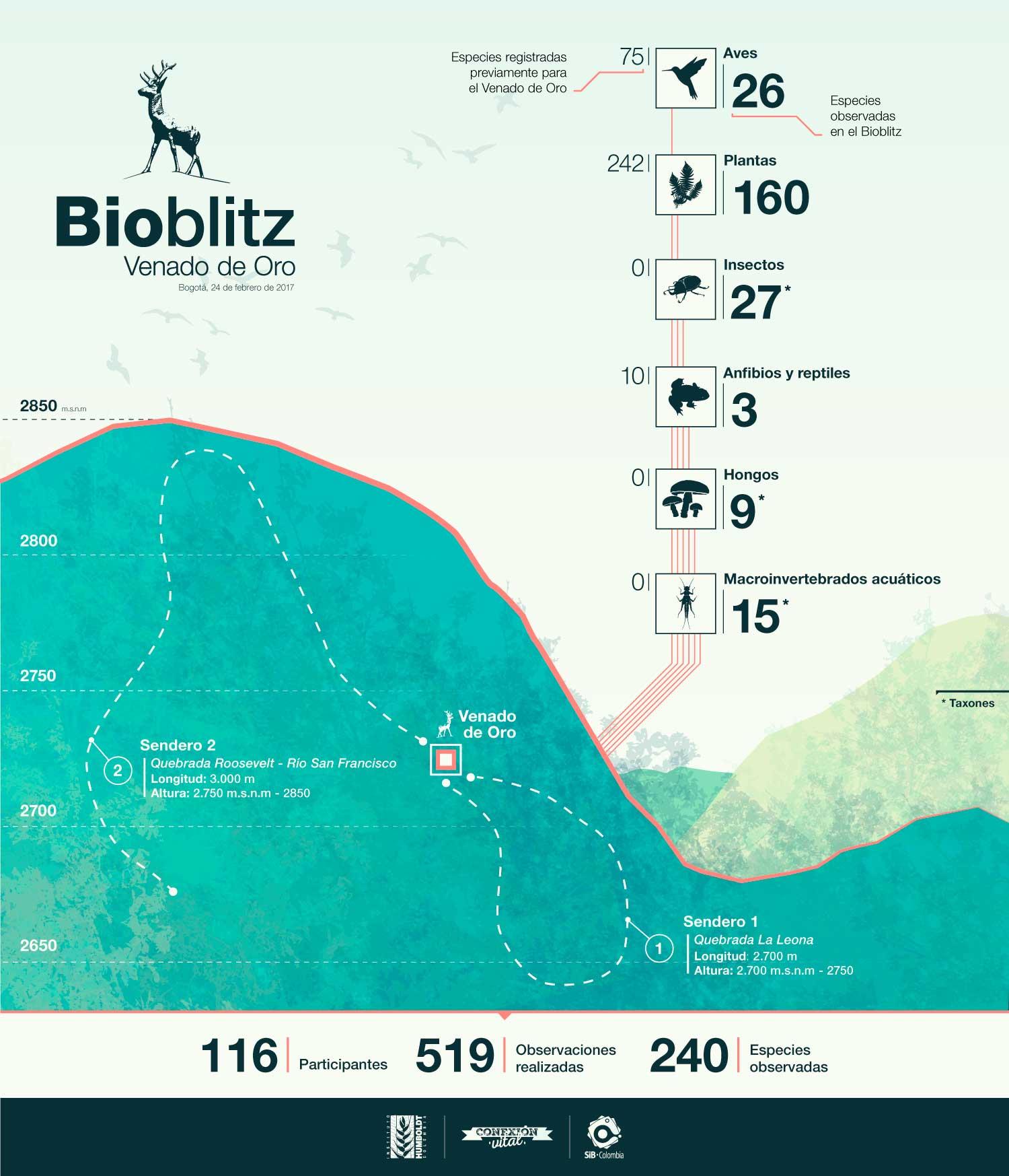 BioBlitz Venado de Oro