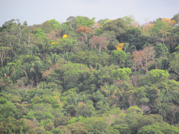 Bosques secos tropicales en Colombia