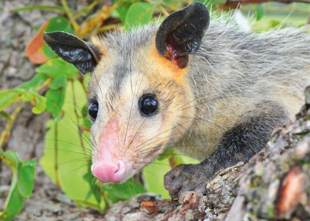 Libro rojo de mamiferos de colombia online dating